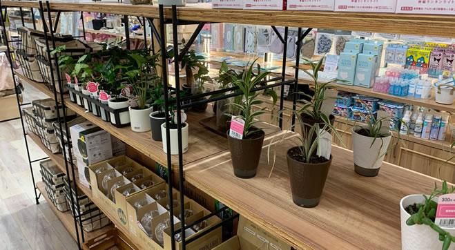 スリーピー 観葉植物